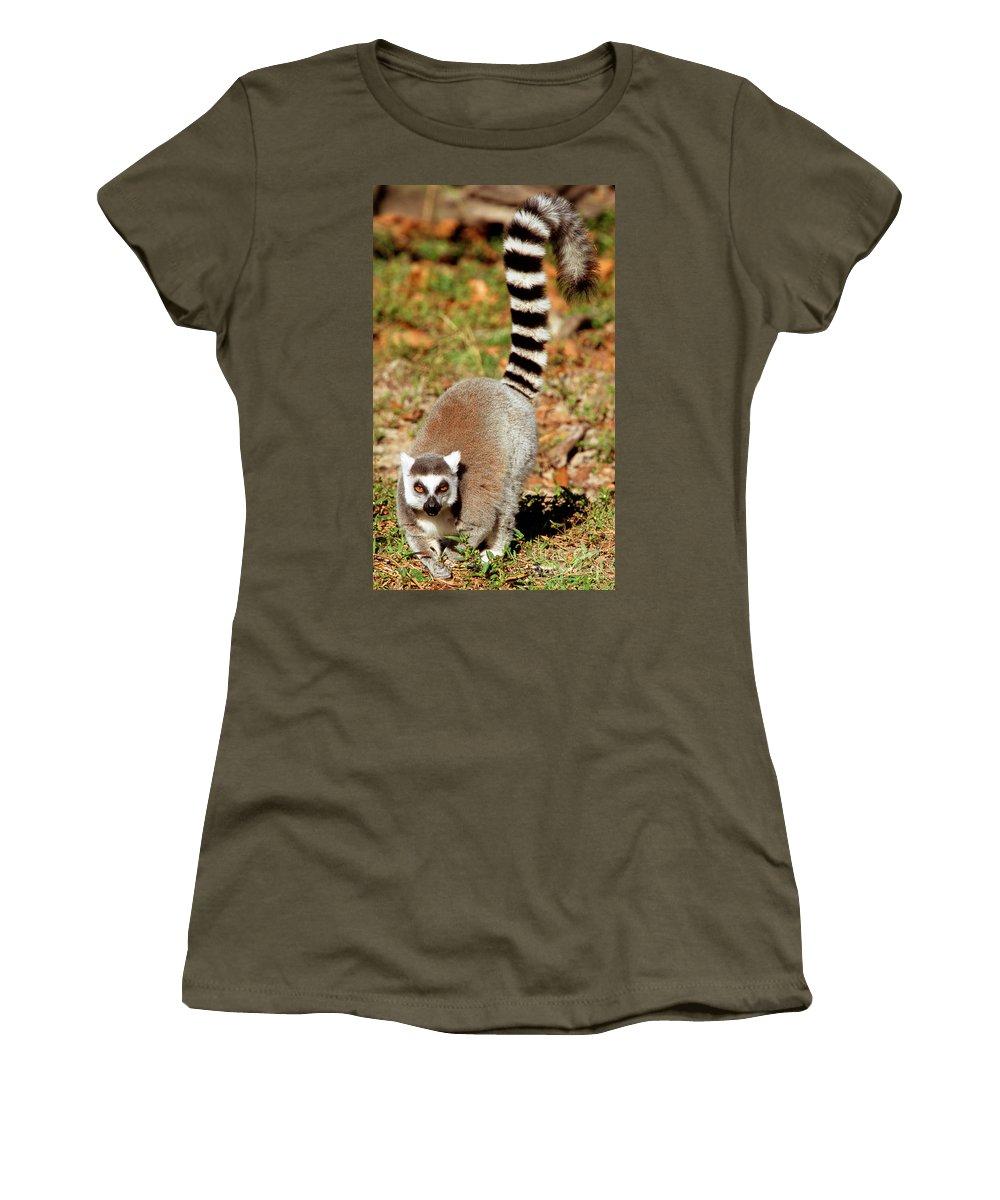 Animal Women's T-Shirt featuring the photograph Ring-tailed Lemur Lemur Catta Walking by Millard H. Sharp