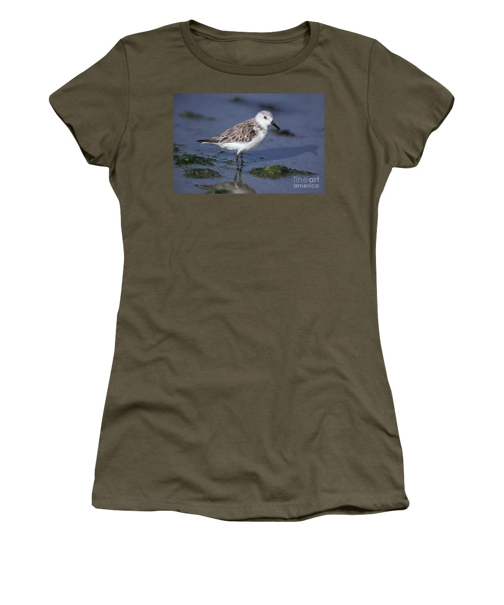 Fauna Women's T-Shirt featuring the photograph Sandpiper Calidris Mauri by Ron Sanford