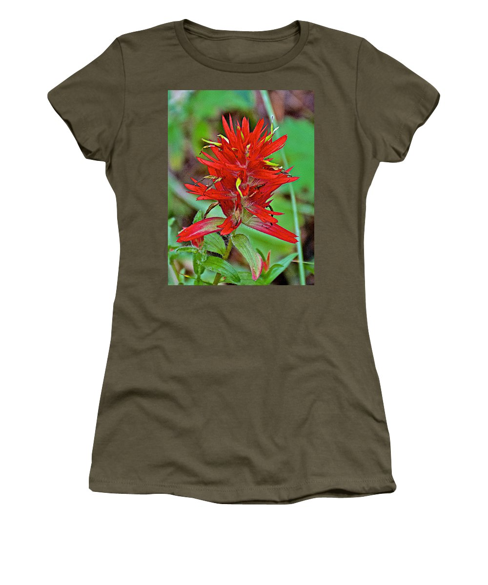 Scarlet Paintbrush On Trail To Swan Lake In Grand Teton National Park Women's T-Shirt featuring the photograph Scarlet Paintbrush On Trail To Swan Lake In Grand Teton National Park-wyoming- by Ruth Hager