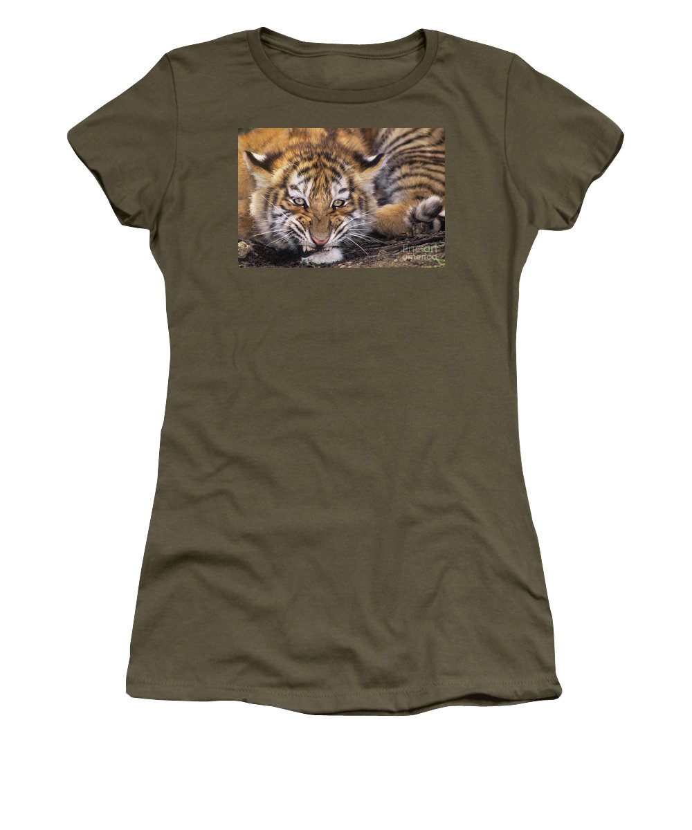 Siberian Tiger Women's T-Shirt featuring the photograph Siberian Tiger Cub Panthera Tigris Altaicia Wildlife Rescue by Dave Welling