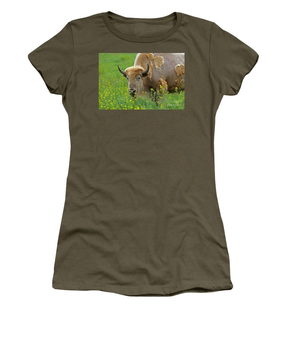 White Buffalo Women's T-Shirt featuring the photograph Stopped To Smell The Flowers by Elizabeth Winter