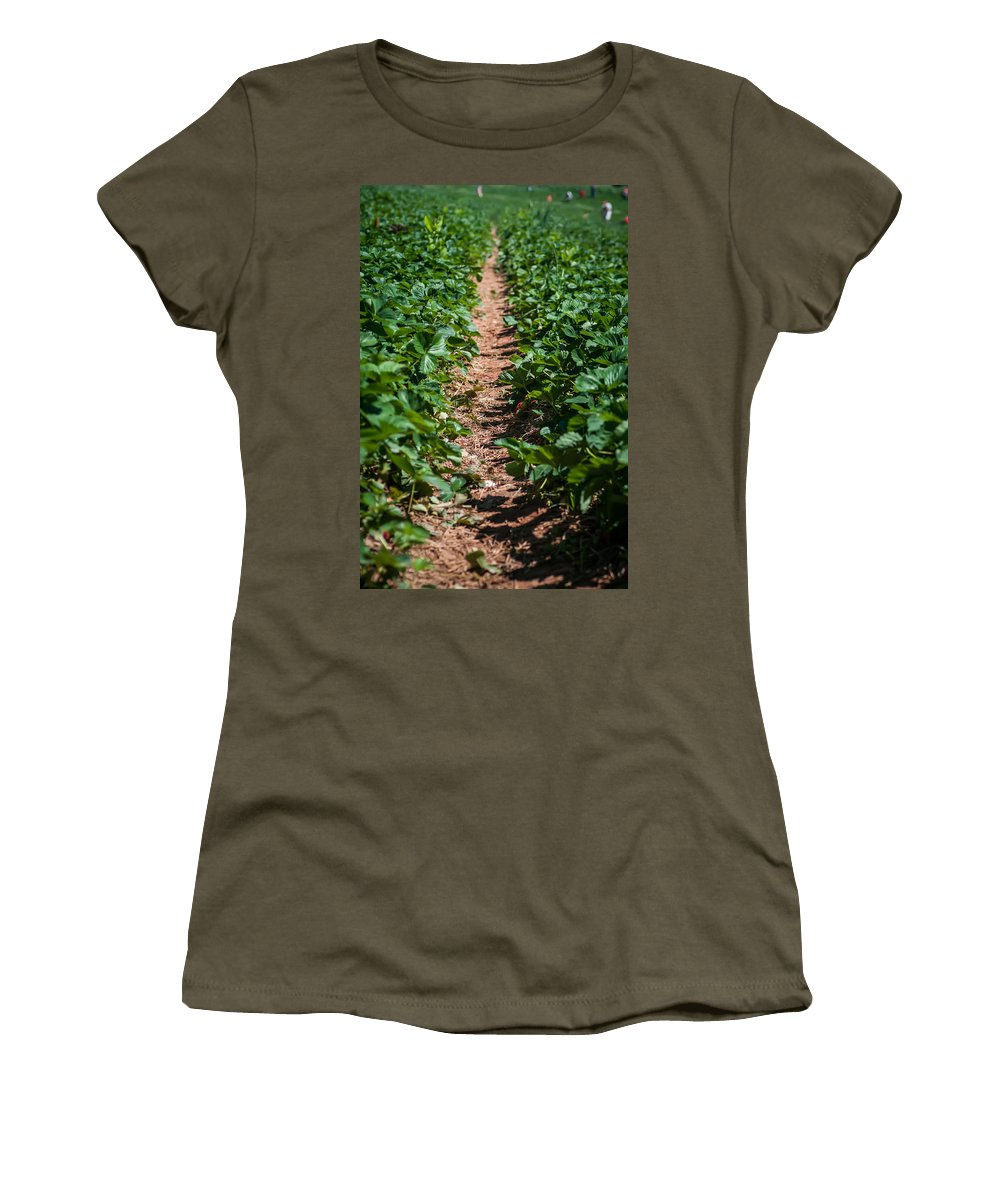 Agricultural Women's T-Shirt featuring the photograph Strawberry Farm Field by Alex Grichenko