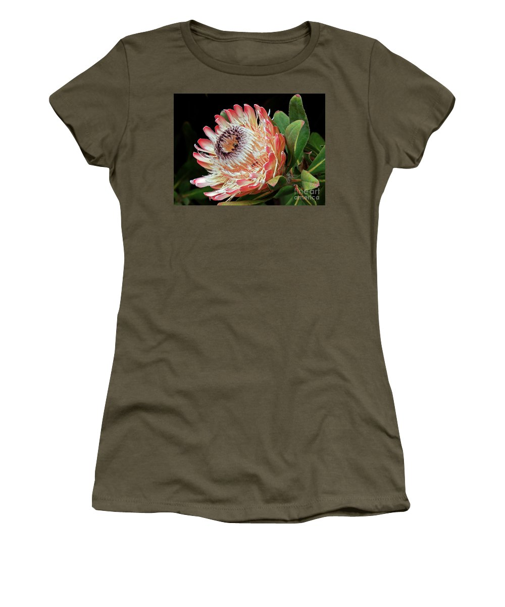 Kate Brown Women's T-Shirt featuring the photograph Sugarbush And Bees by Kate Brown