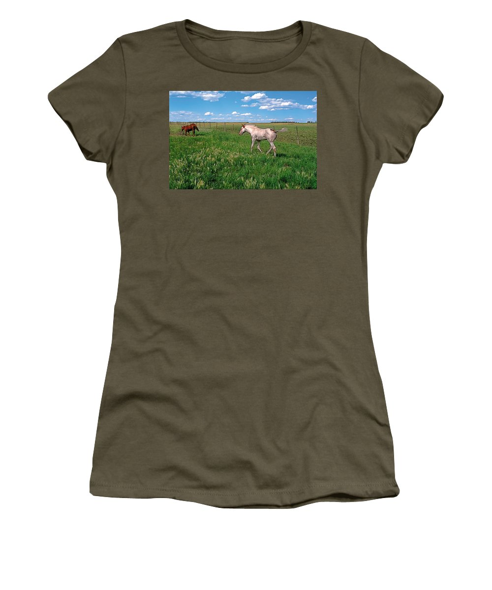 Scenic Women's T-Shirt featuring the painting Summer Colt by Terry Reynoldson