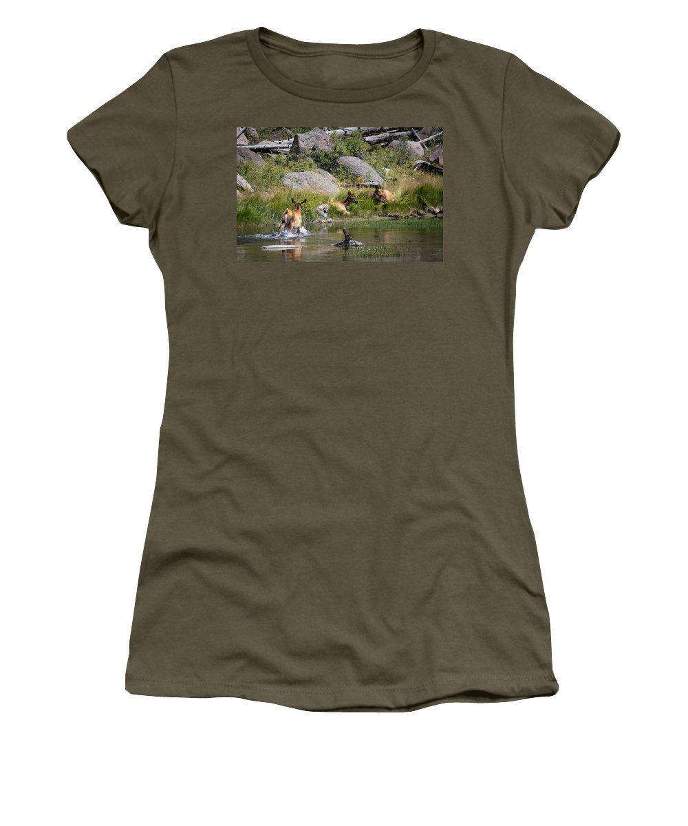 Elk Women's T-Shirt featuring the photograph Summer Morning Dip - Elk In Yellowstone National Park - Wyoming by Diane Mintle