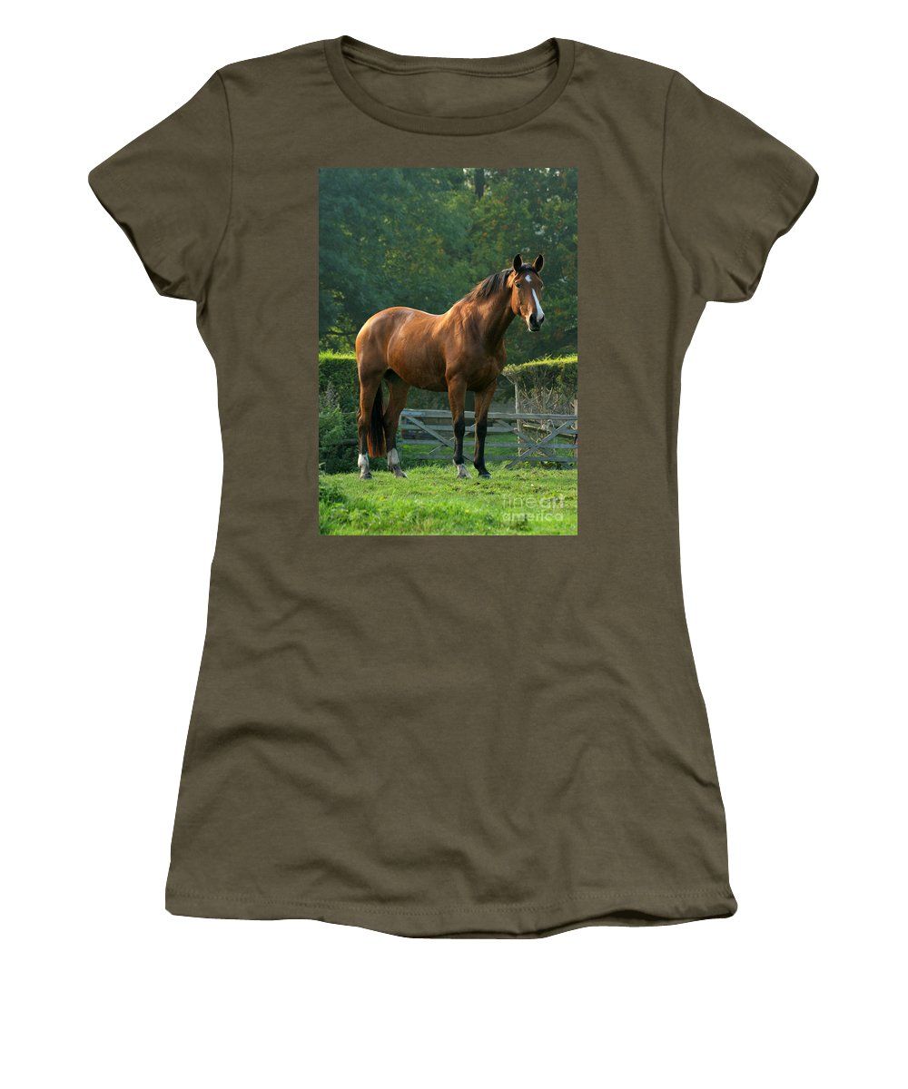 Horse Women's T-Shirt featuring the photograph The Observer by Angel Ciesniarska