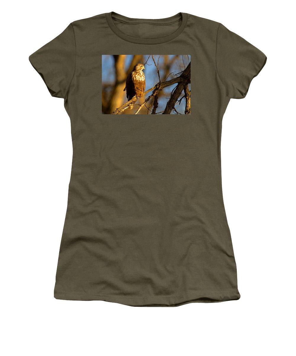 Hawk Photograph Women's T-Shirt featuring the photograph The Sundowner by Jim Garrison