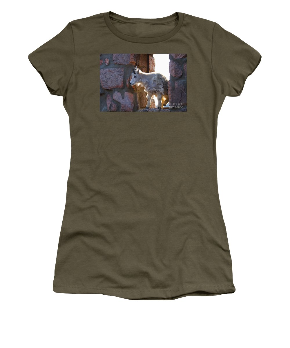 Mountain Goat Women's T-Shirt featuring the photograph The Unexpected Guest by Jim Garrison