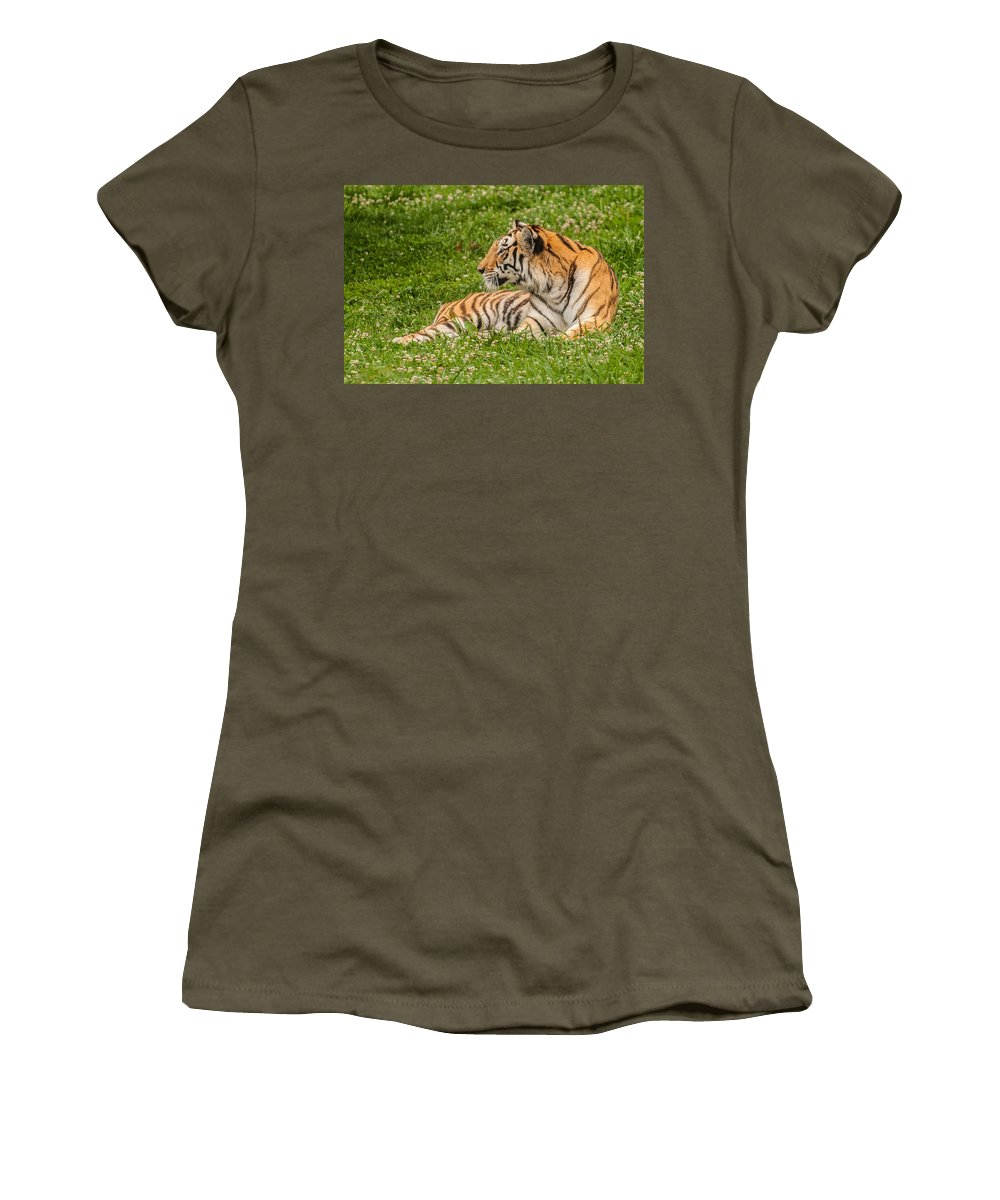 Tiger Women's T-Shirt featuring the photograph Tiger At Rest 2 by Photos By Cassandra