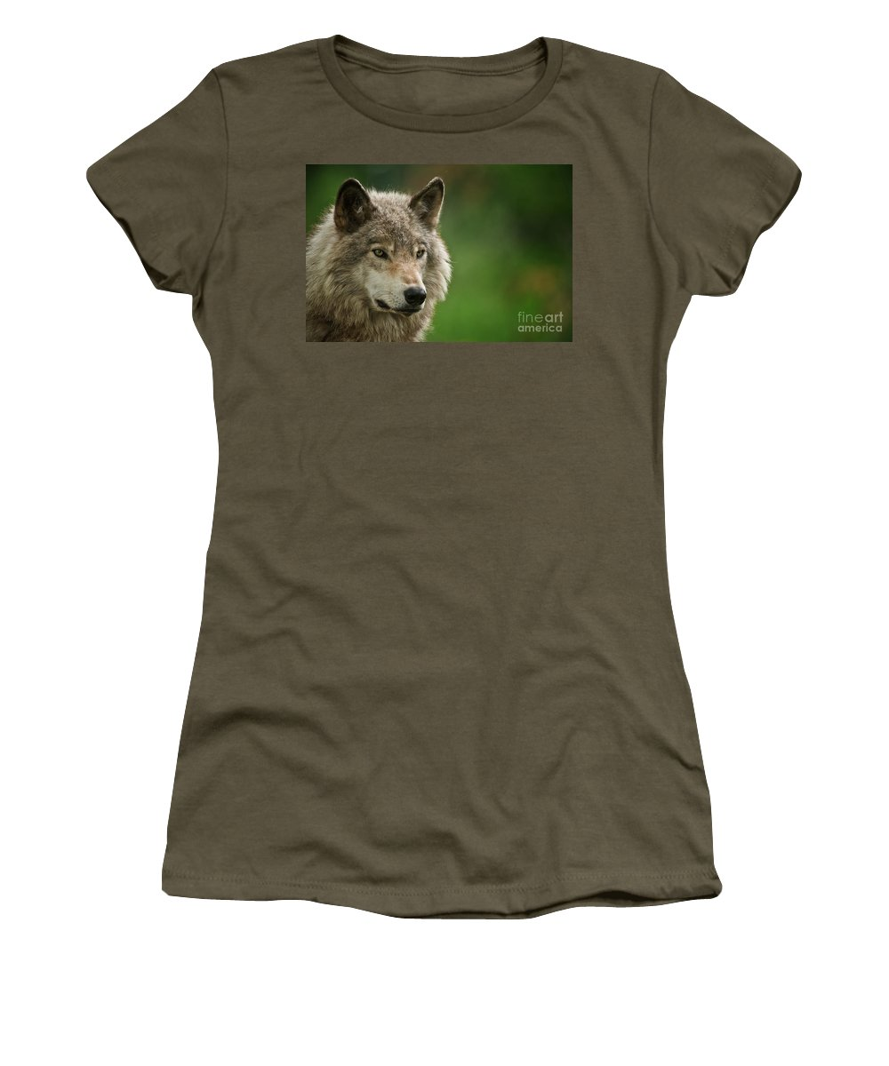 Timber Wolf Women's T-Shirt featuring the photograph Timber Wolf Pictures 261 by Wolves Only