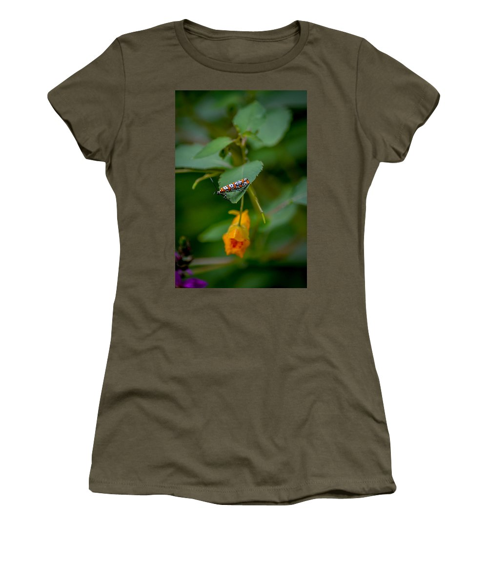 Ailanthus Webworm Moth Women's T-Shirt featuring the photograph Webworm by Michael Brooks