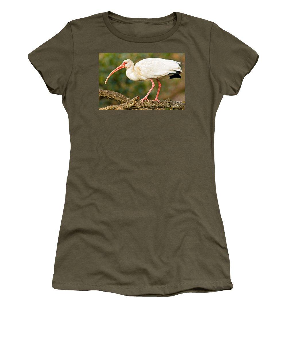 Nature Women's T-Shirt featuring the photograph White Ibis by Millard H. Sharp