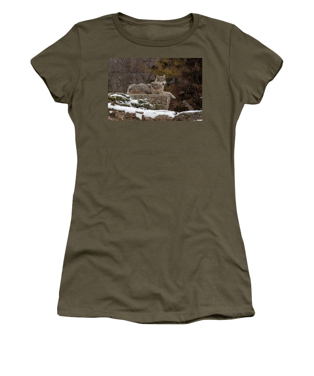 Female Wolves Women's T-Shirt featuring the photograph Who Me by Thomas Sellberg
