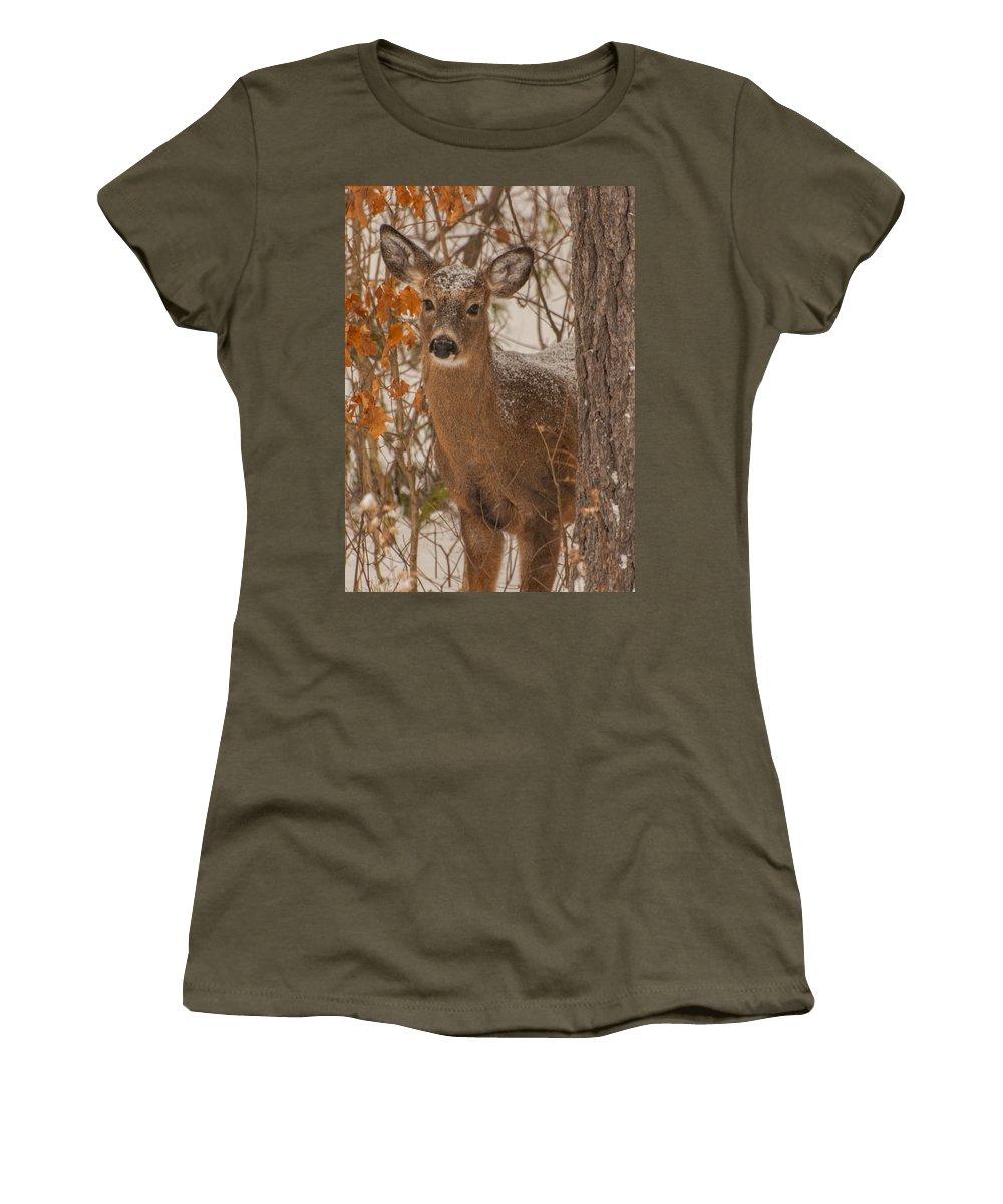 Brenda Jacobs Fine Art Women's T-Shirt featuring the photograph Winter Fawn by Brenda Jacobs