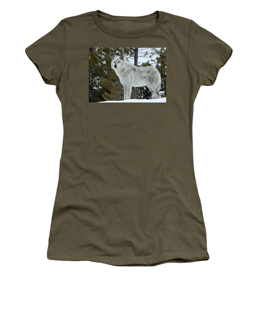 Wolf Women's T-Shirt featuring the photograph Wolf - Curiousity by Fran Riley