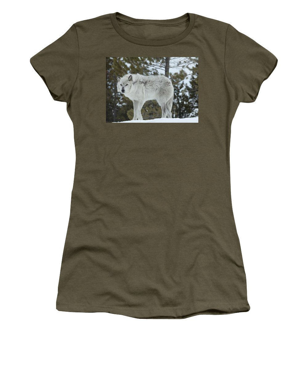 Wolf Women's T-Shirt featuring the photograph Wolf - Nervous by Fran Riley
