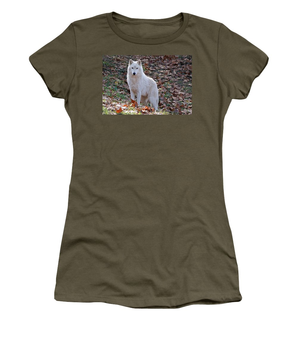 Wolf Women's T-Shirt featuring the photograph Wolf In Autumn by Sandy Keeton