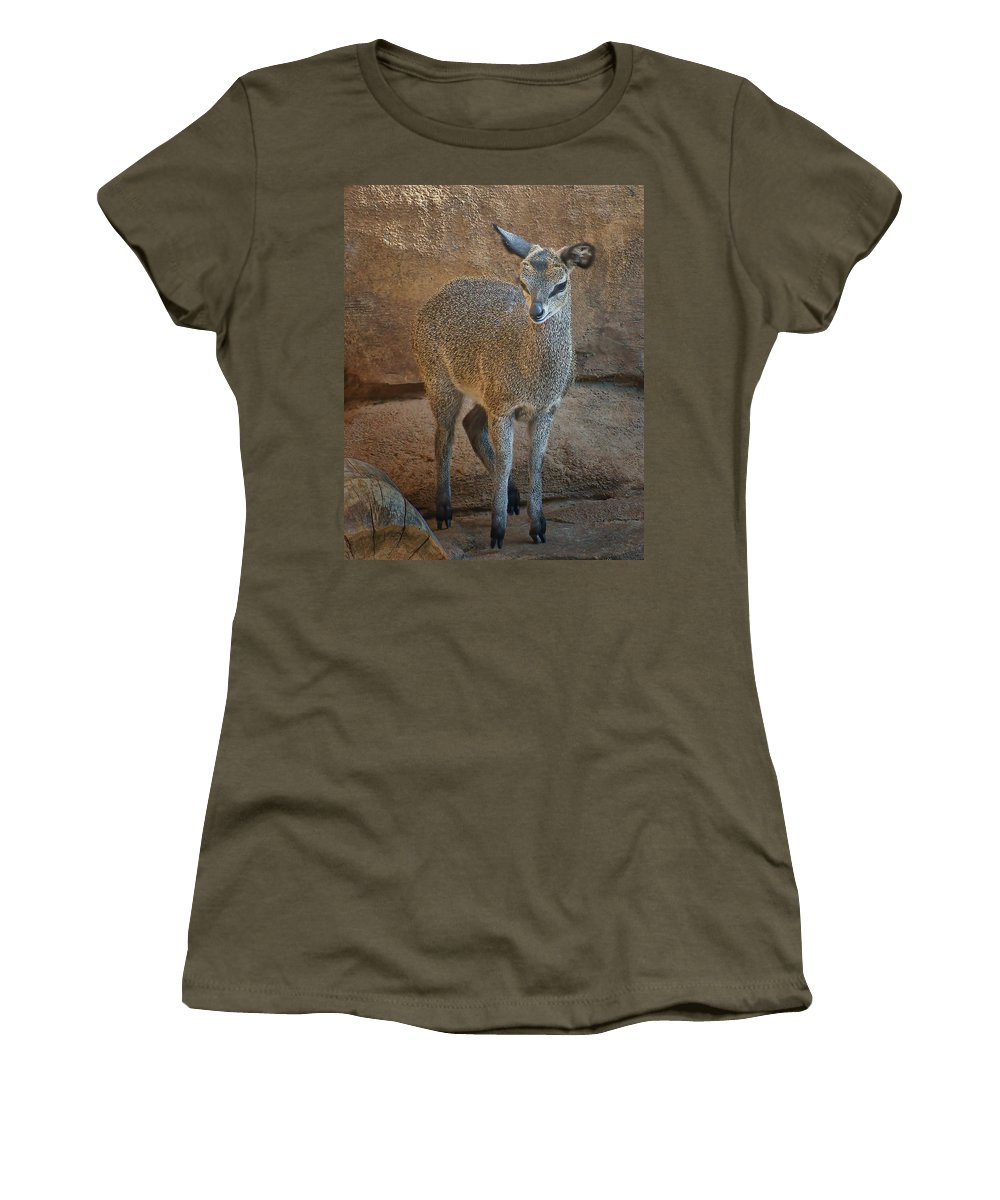 Klipspringer Women's T-Shirt featuring the photograph Young Female Klipspringer by Nikolyn McDonald