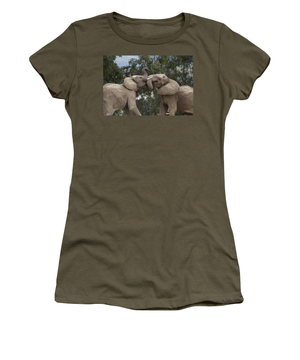 Mp Women's T-Shirt featuring the photograph African Elephant Loxodonta Africana by Zssd