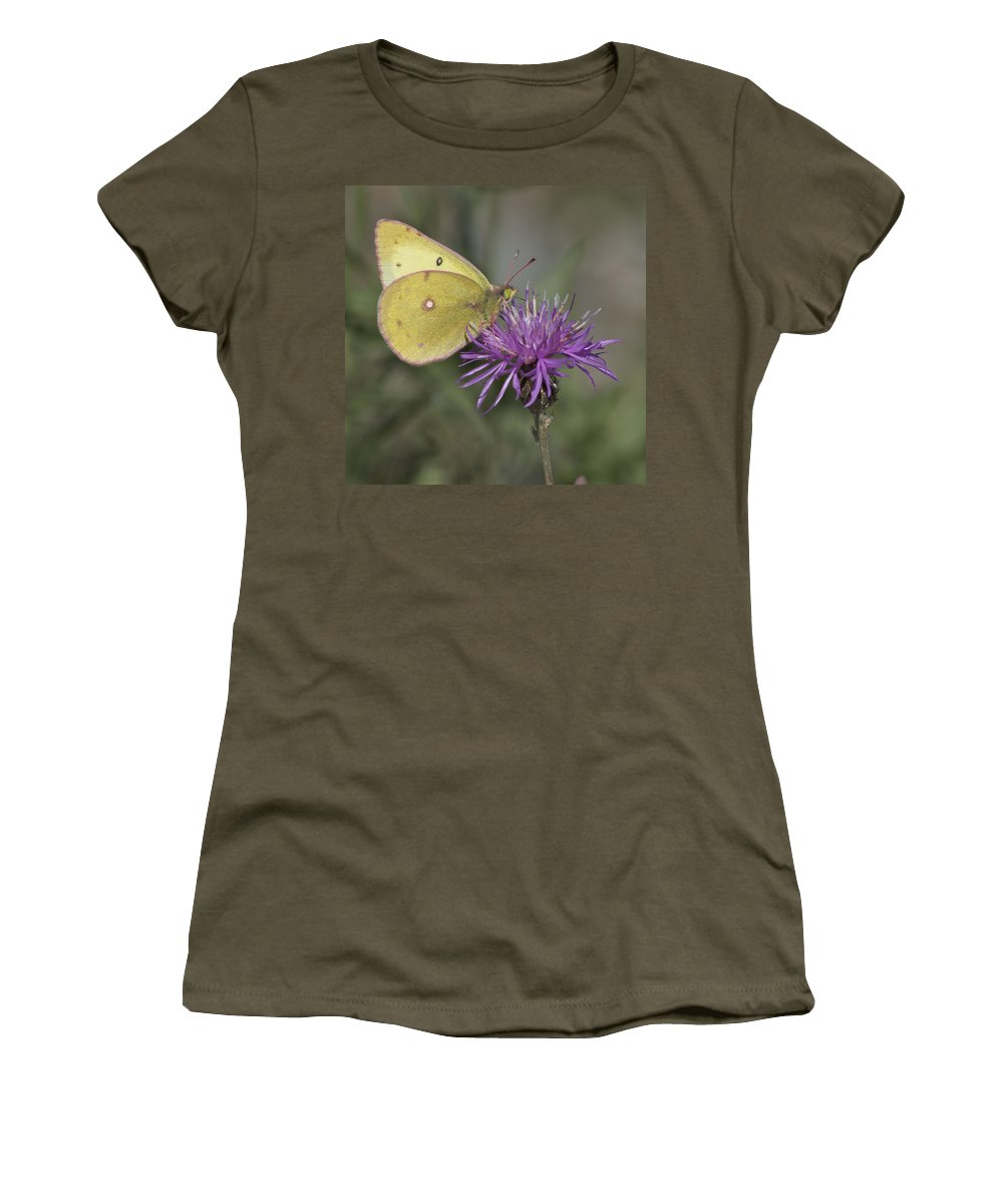 Butterfly Women's T-Shirt featuring the photograph Clouded Yellow Butterfly by Cathie Douglas