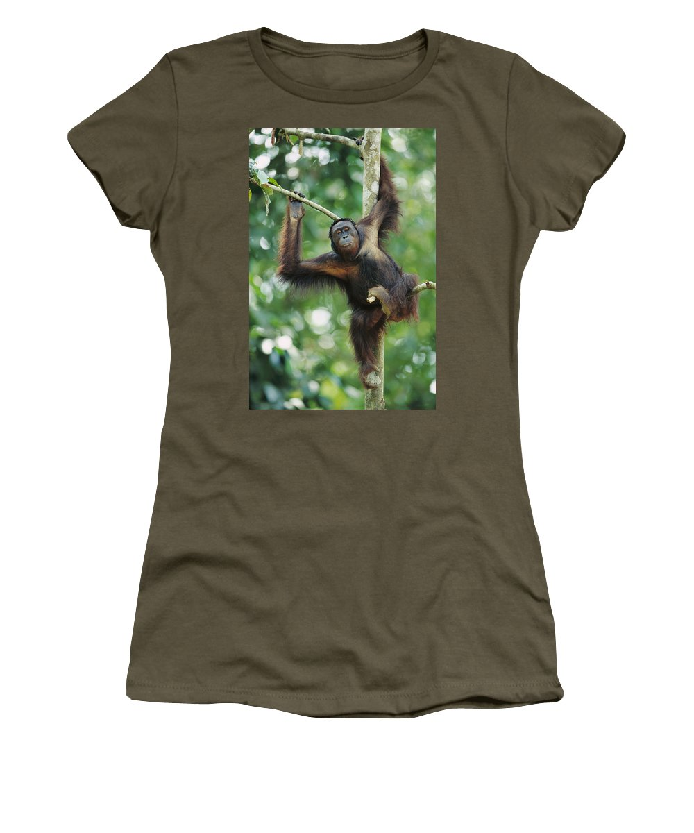 Mp Women's T-Shirt featuring the photograph Orangutan Pongo Pygmaeus Adult Sitting by Cyril Ruoso