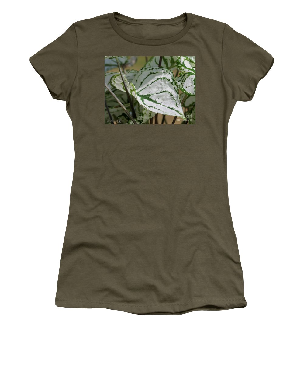 Caladium Women's T-Shirt featuring the photograph Caladium Named White Christmas by J McCombie