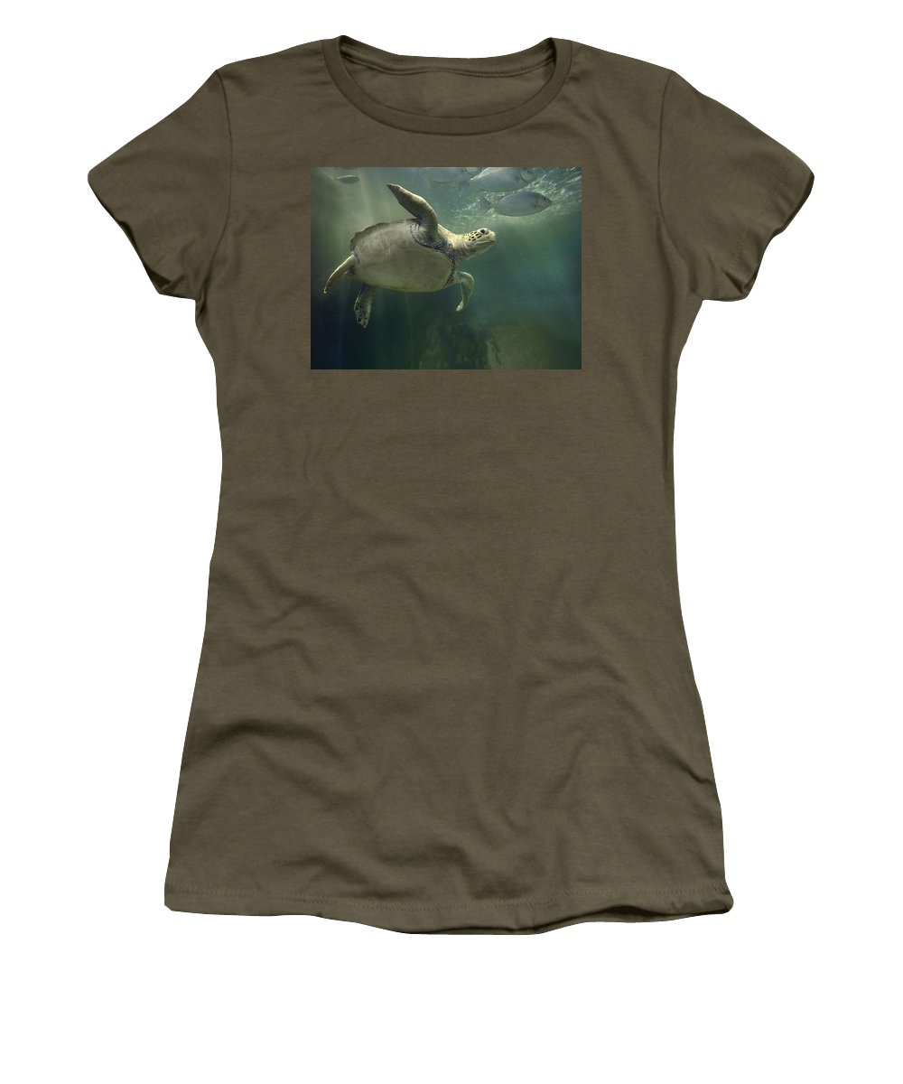 Mp Women's T-Shirt featuring the photograph Green Sea Turtle Chelonia Mydas by Tim Fitzharris