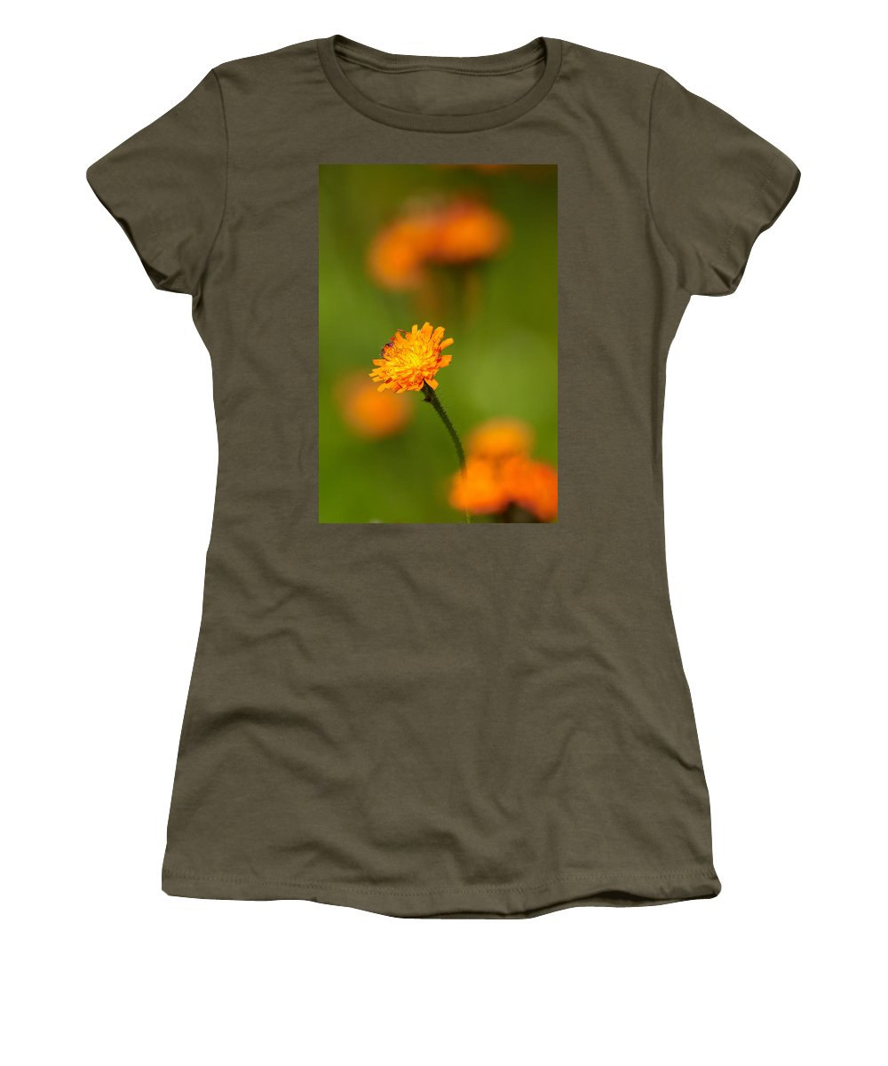Jouko Lehto Women's T-Shirt featuring the photograph Orange Hawkweed by Jouko Lehto
