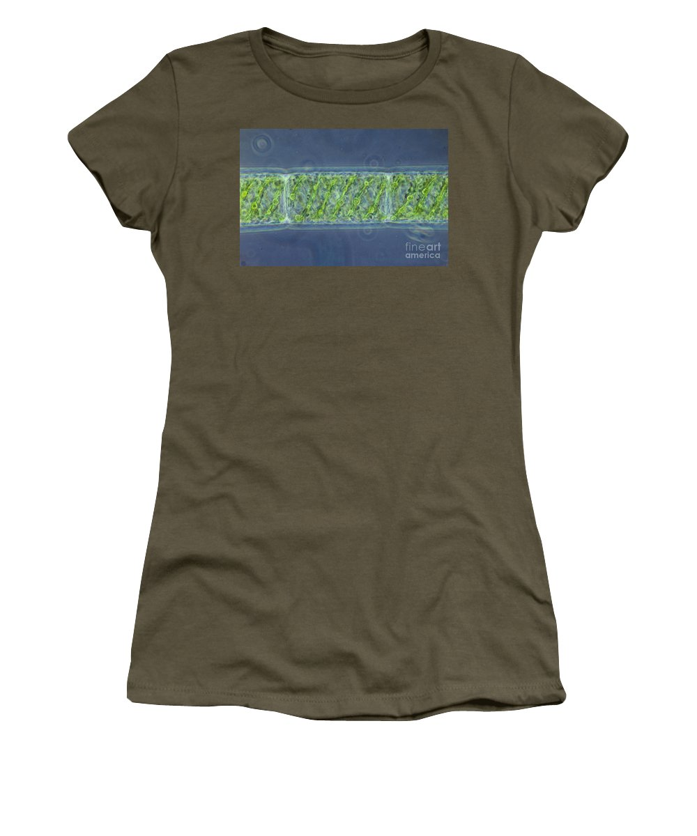 Science Women's T-Shirt featuring the photograph Spirogyra Sp. Algae Lm by M. I. Walker
