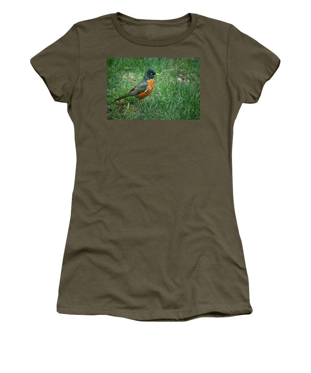 Daniel J. Kmiecik Women's T-Shirt featuring the photograph American Robin by Onyonet Photo Studios