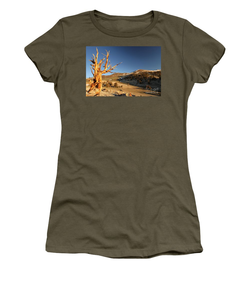 Bristlecone Pine Tree Women's T-Shirt featuring the photograph Ancient by Adam Jewell