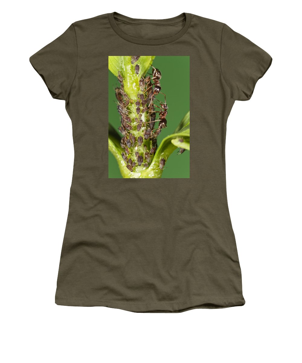Mp Women's T-Shirt featuring the photograph Ant Formicidae Pair Protecting Aphids by Konrad Wothe