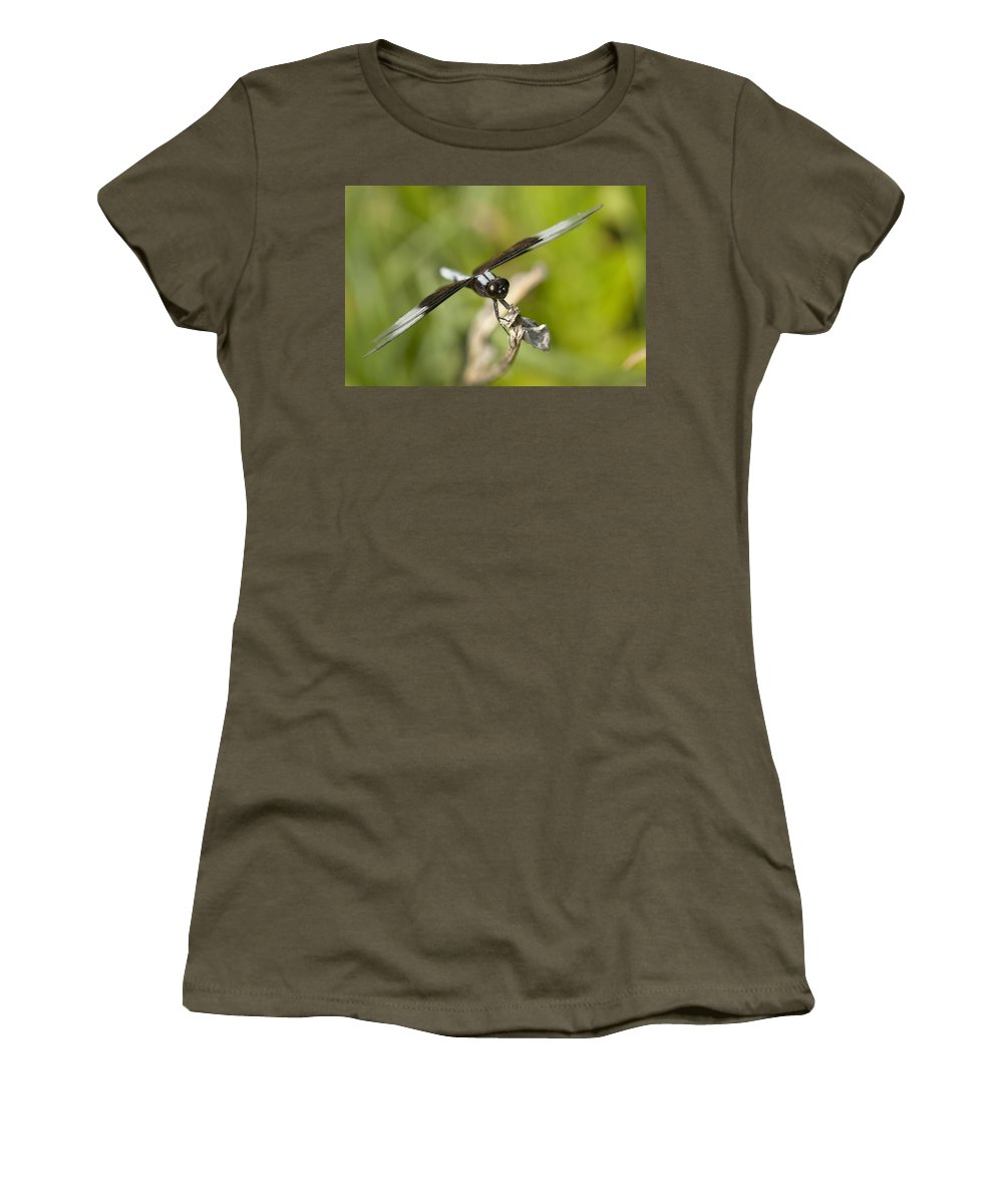 Libellula Luctuosa Women's T-Shirt featuring the photograph Black And White Widow Skimmer Dragonfly by Kathy Clark