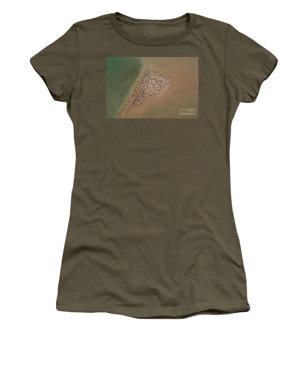 Animal Women's T-Shirt featuring the photograph Brown Pelican Flock by Raul Gonzalez Perez