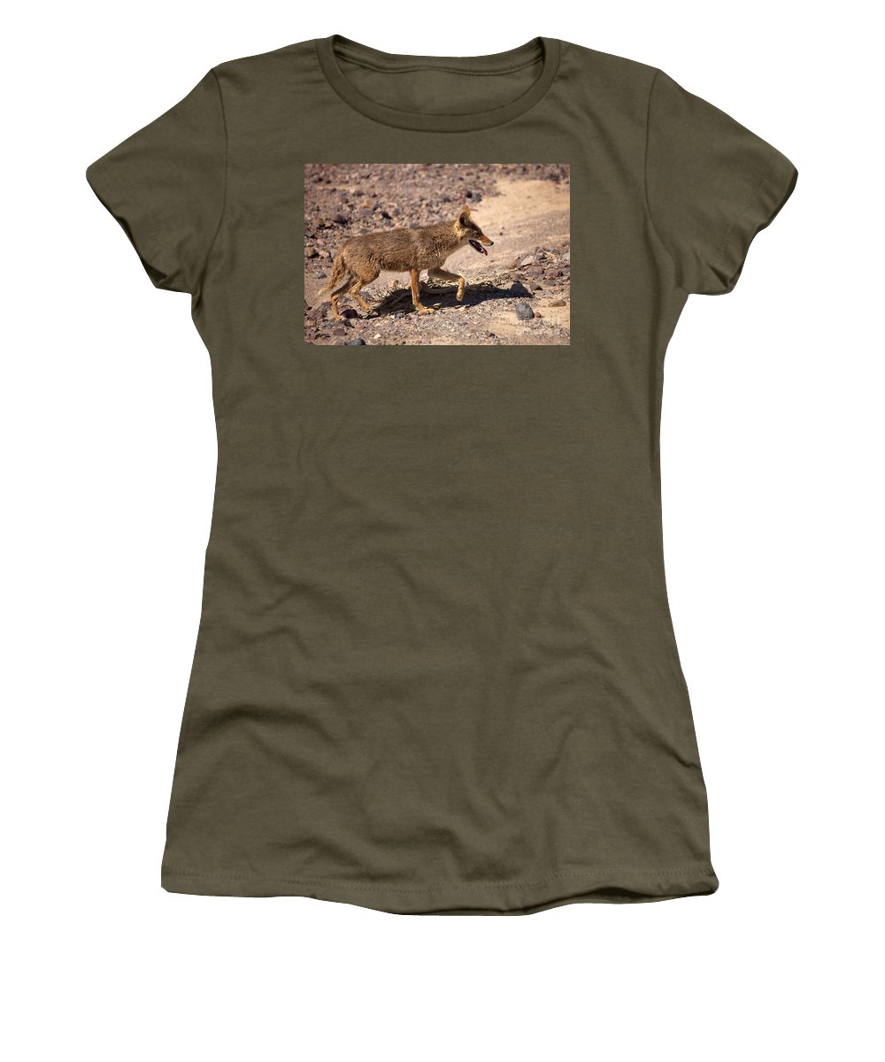 Coyote Women's T-Shirt featuring the photograph Death Valley Coyote by Mike Dawson