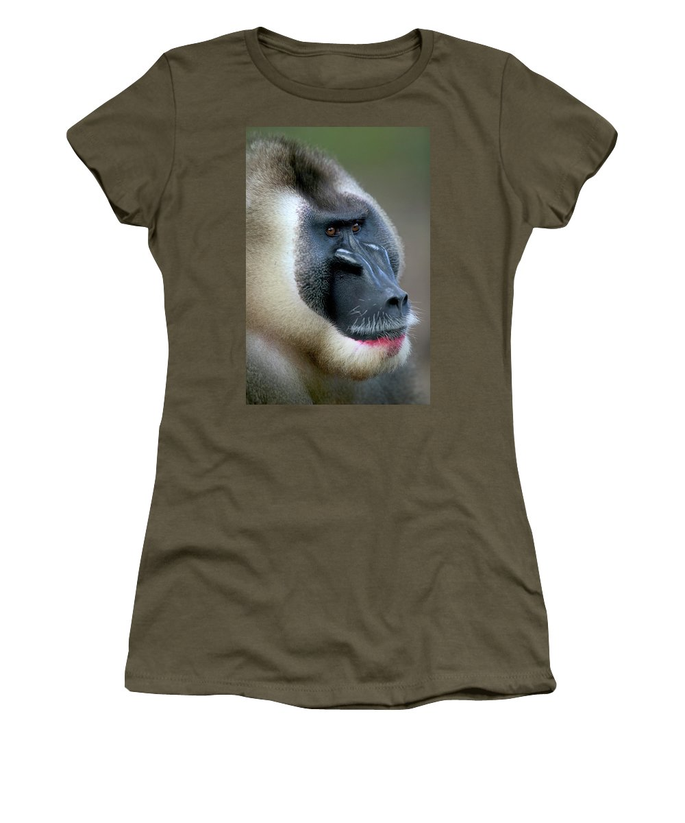 Mp Women's T-Shirt featuring the photograph Drill Mandrillus Leucophaeus Adult by Cyril Ruoso