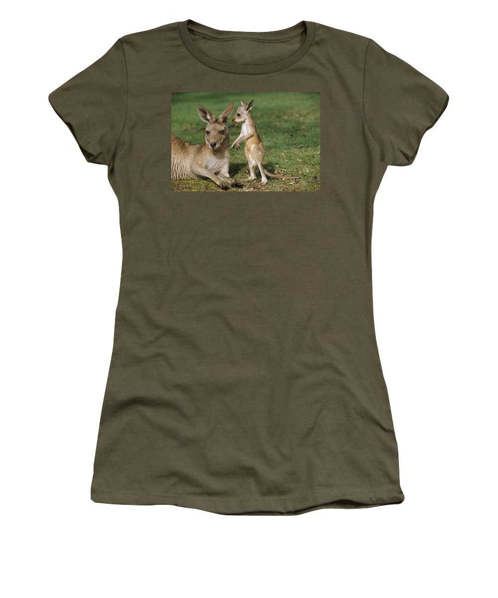 Mp Women's T-Shirt featuring the photograph Eastern Grey Kangaroo And Joey by Cyril Ruoso