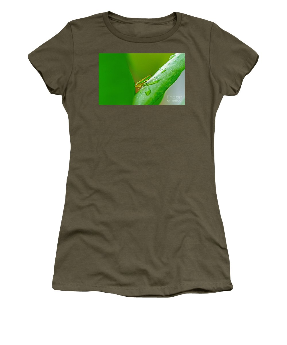 Bugs Women's T-Shirt featuring the photograph Green And Yellow Bug by Randy Harris