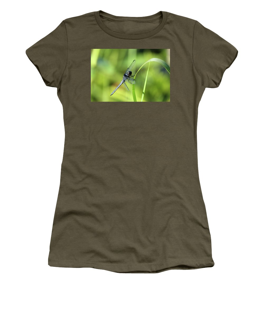 Insect Women's T-Shirt featuring the photograph Just Hanging On by Karol Livote