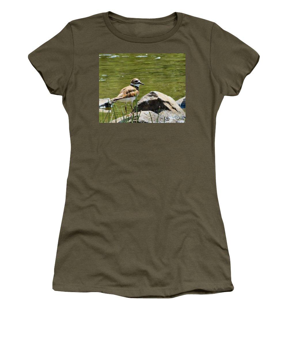 Killdeer Women's T-Shirt featuring the photograph Killdeer by Art Dingo