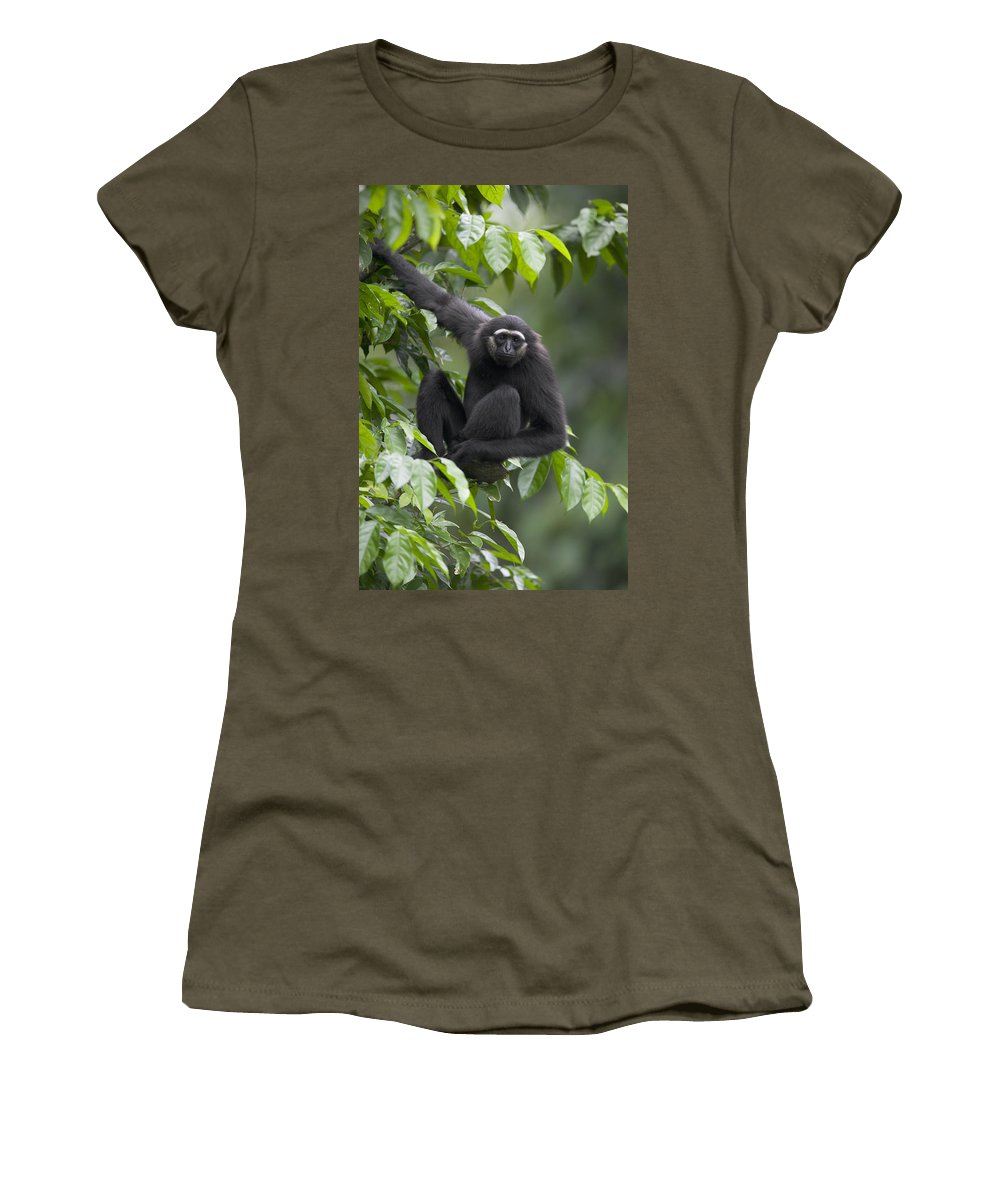 Mp Women's T-Shirt featuring the photograph M�llers Bornean Gibbon Hylobates by Cyril Ruoso