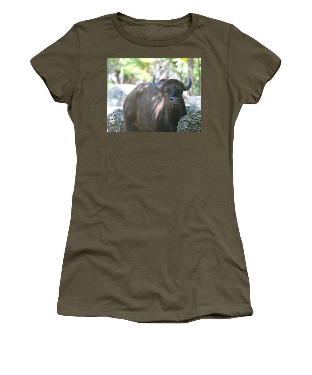 Animal Women's T-Shirt featuring the photograph Pam The Bull by Rob Hans