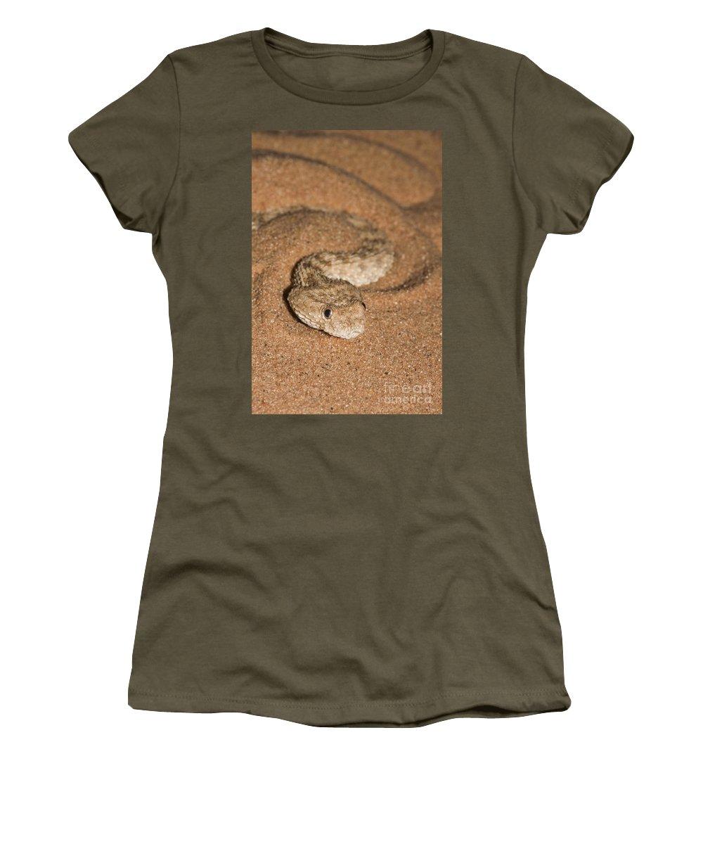 Sahara Sand Viper Women's T-Shirt featuring the photograph Sahara Sand Viper Cerastes Vipera by Alon Meir