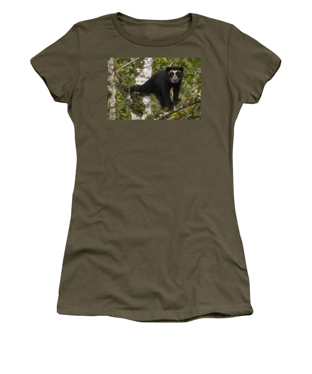 Mp Women's T-Shirt featuring the photograph Spectacled Bear Tremarctos Ornatus Cub by Pete Oxford