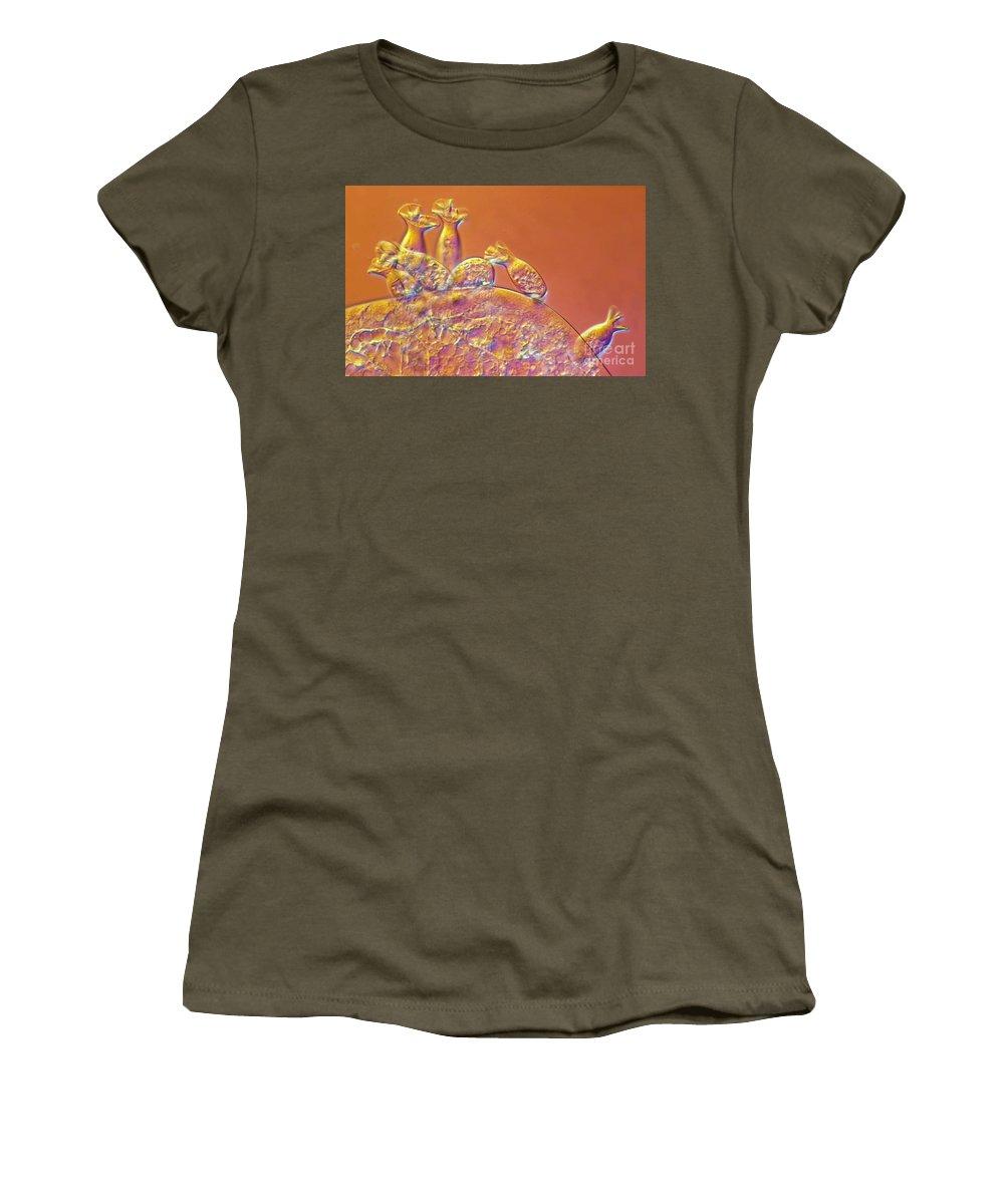 Light Microscopy Women's T-Shirt featuring the photograph Spirochona by M. I. Walker