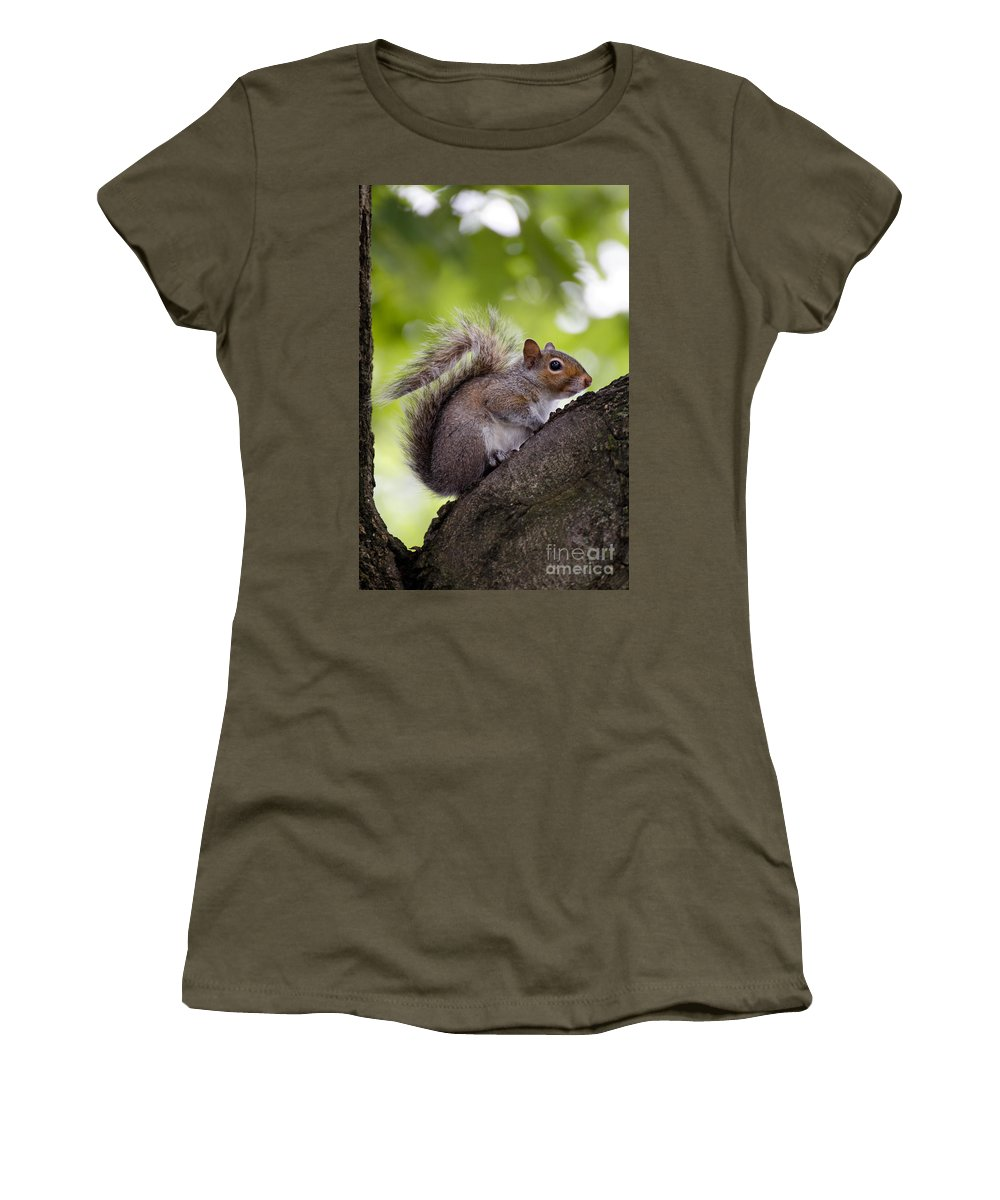 Alert Women's T-Shirt featuring the photograph Squirrel Before Green Leaves by Jannis Werner