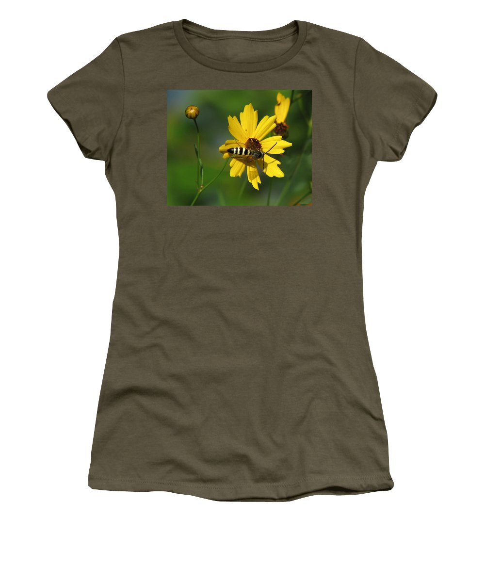 Nature Women's T-Shirt featuring the photograph Striped Bee On Wildflower by Peg Urban