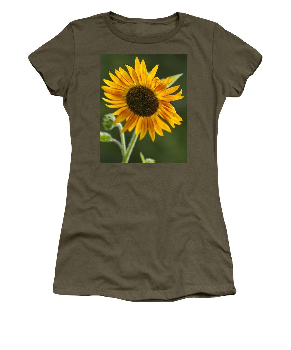 Sunflower Women's T-Shirt featuring the photograph Sunflower by Kathy Clark