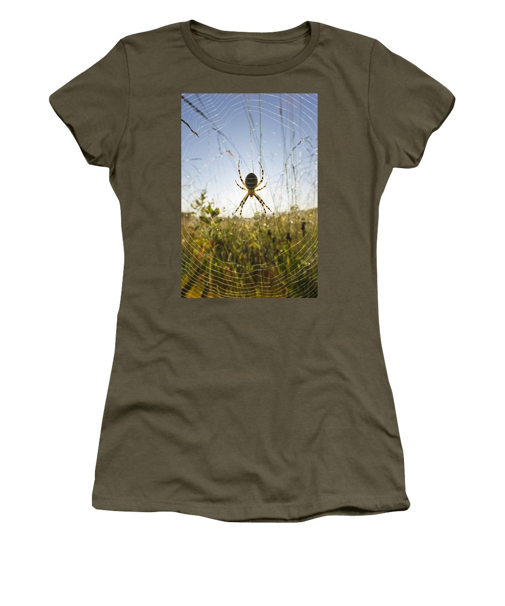 Mp Women's T-Shirt featuring the photograph Wasp Spider Argiope Bruennichi In Web by Konrad Wothe