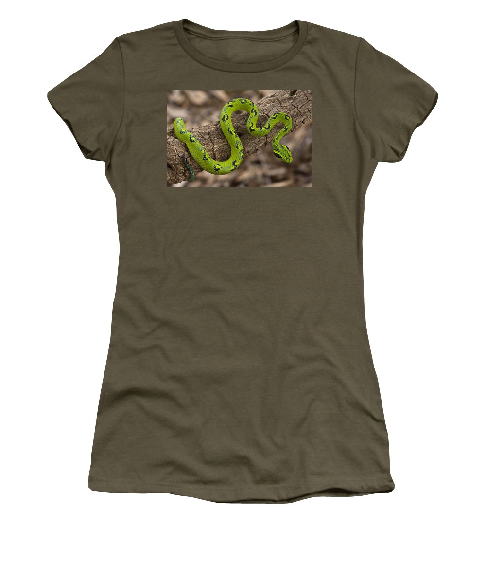 Mp Women's T-Shirt featuring the photograph Yellow-blotched Palm Pitviper by Pete Oxford